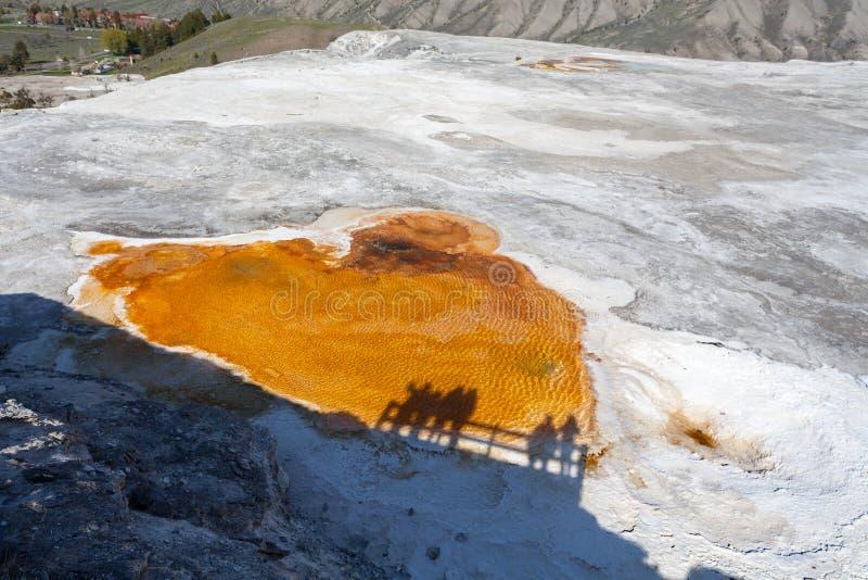 Mammoth Hot Springs, Йеллоустон, Вайоминг, США стоковые изображения