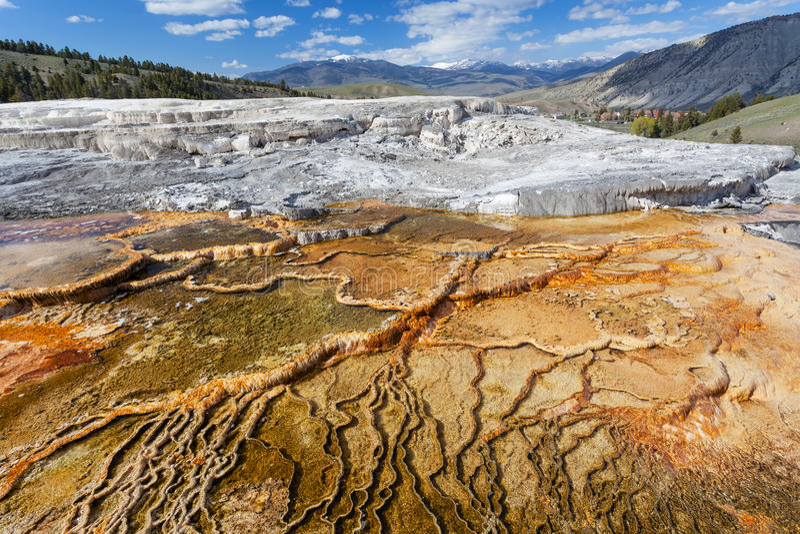 Mammoth Hot Springs, Йеллоустон, Вайоминг, США стоковые фотографии rf