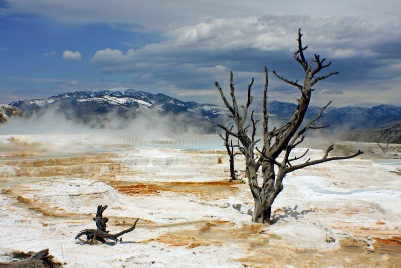 Mammoth Hot Springs stockbilder