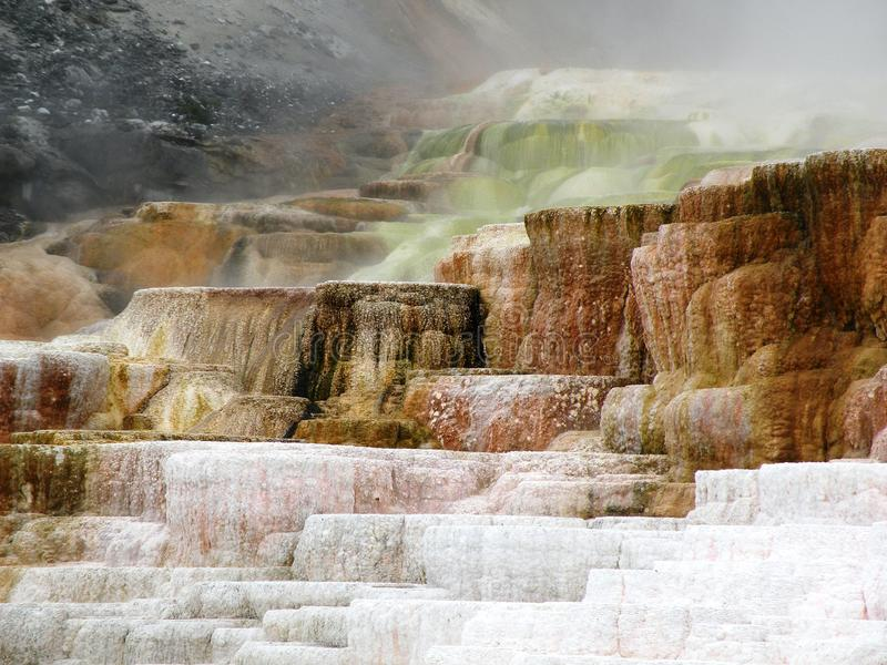 Mammoth Hot Springs 库存图片