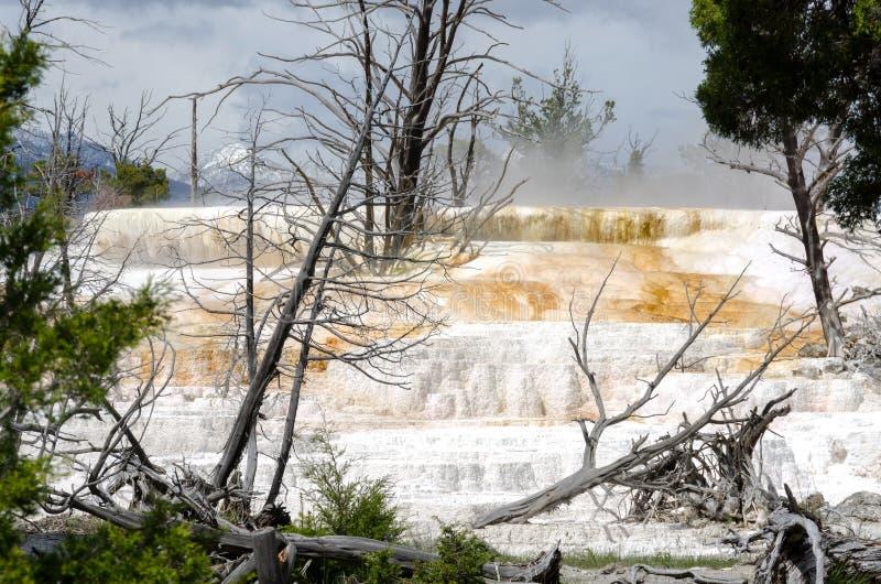 Download Mammoth Hot Springs imagem de stock. Imagem de naturalizado - 29843697