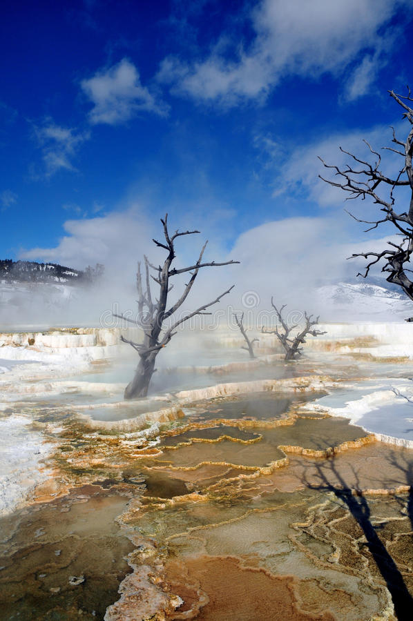 Mammoth Hot Springs yellowstone image stock