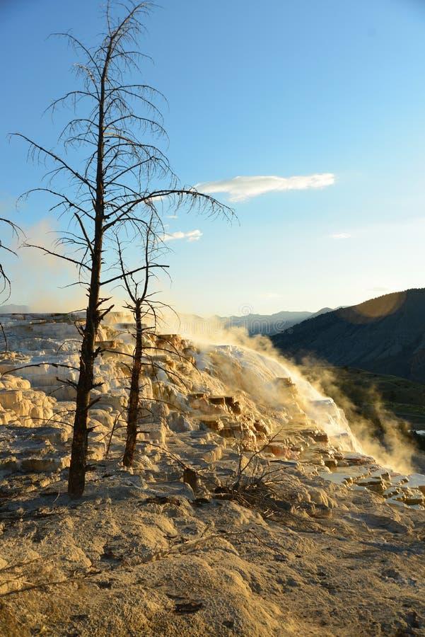 Mammoth Hot Springs in Yellowstone stockfotos
