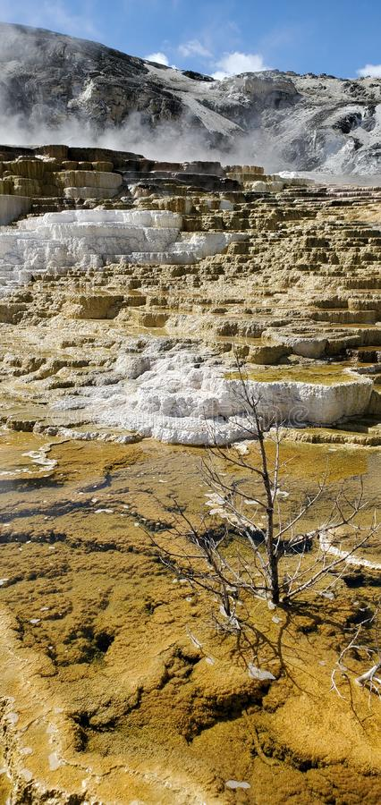Mammoth Hot Springs in Yellowstone National Park stock fotografie