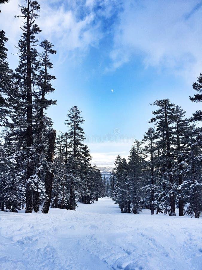 Mammoth Mountain fotografia stock libera da diritti
