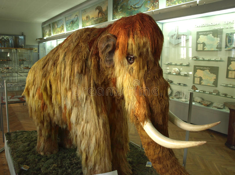 Mammoth no museu fotos de stock royalty free