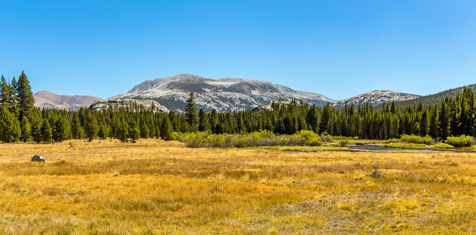 Mammoth Peak from Dana Fork. Mammoth Peak is at the northern end of the Kuna Crest in Yosemite National Park, very close to CA State route 120. Its summit royalty free stock image