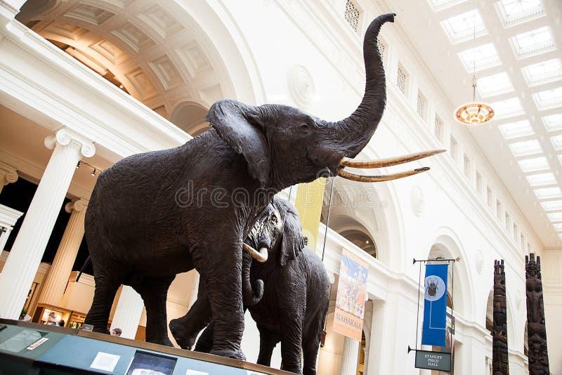 Mammouth au musée de zone photos stock