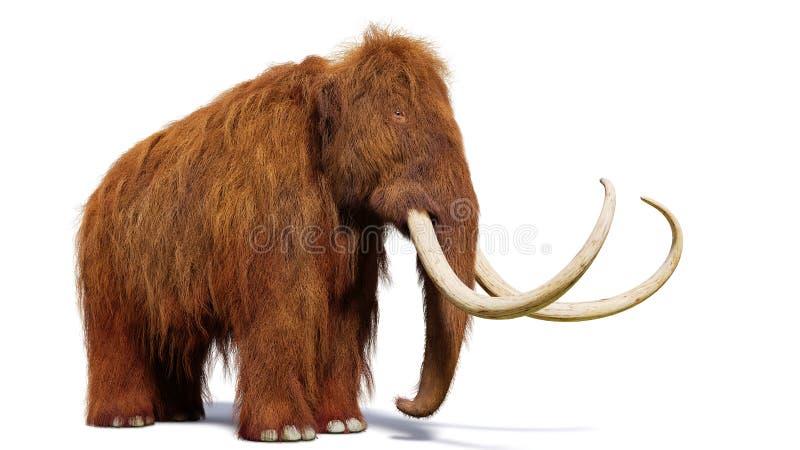 Mammouth laineux, mammifère préhistorique d'isolement avec l'ombre sur le fond blanc photographie stock