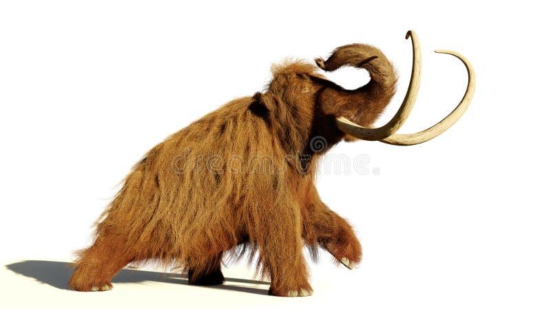 Mammouth laineux, mammifère préhistorique de marche d'isolement avec l'ombre sur le fond blanc photos stock