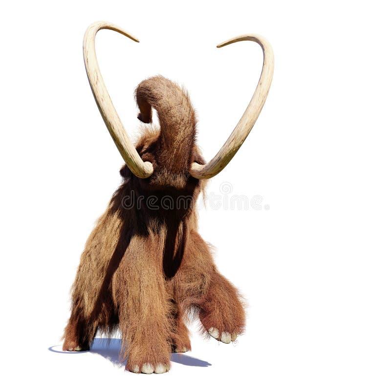 Mammouth laineux, mammifère préhistorique fonctionnant d'isolement avec l'ombre sur le fond blanc photos stock