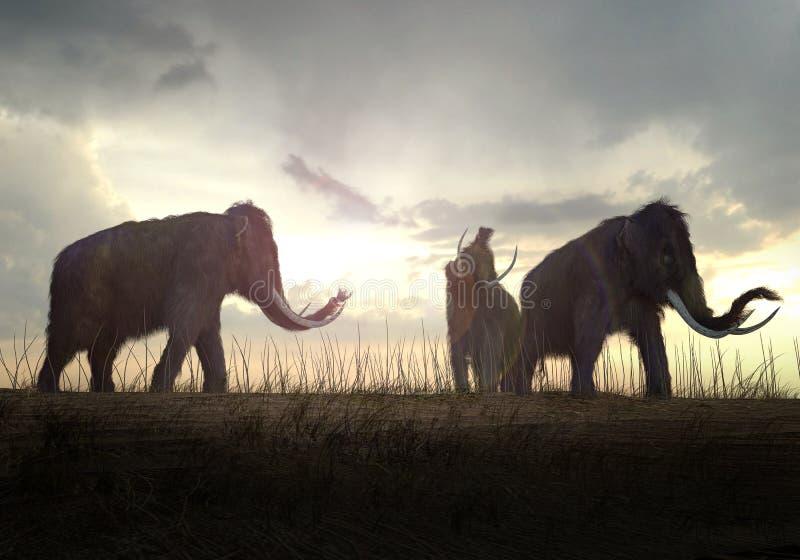 Mammouths laineux dans le coucher du soleil illustration stock