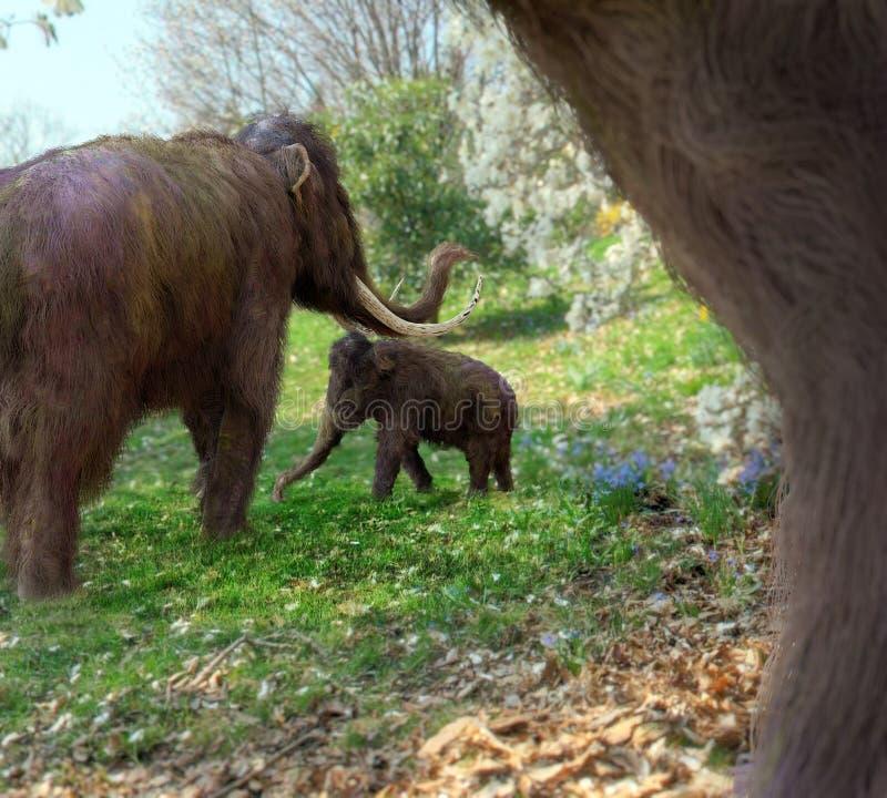 Mammouths laineux dans le pré illustration libre de droits