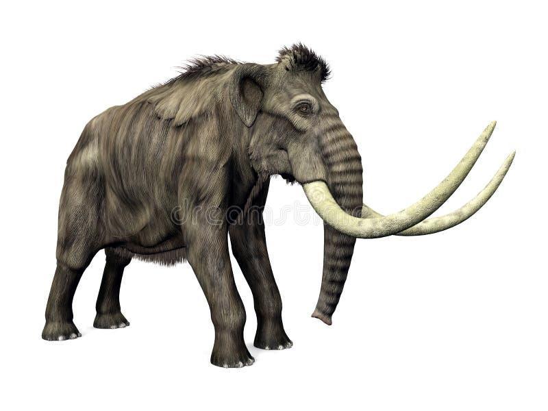 Mammut lizenzfreie abbildung