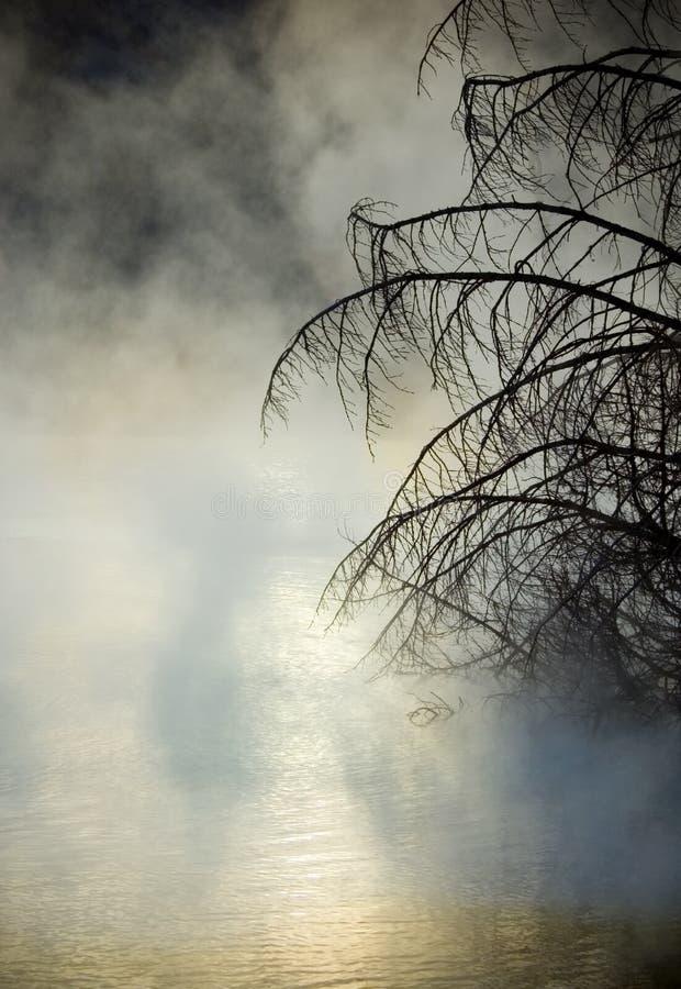 Mammut entspringt Sonnenaufgang-Nebel lizenzfreie stockfotos