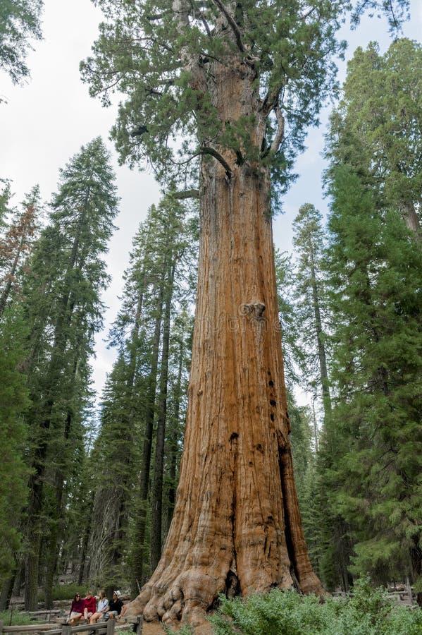 Mammutbaum nationales Park stockbild