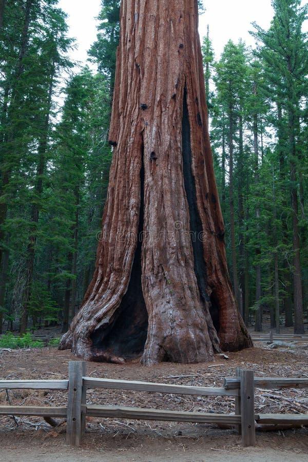 Mammutbaum-Nationalpark, USA lizenzfreie stockfotografie