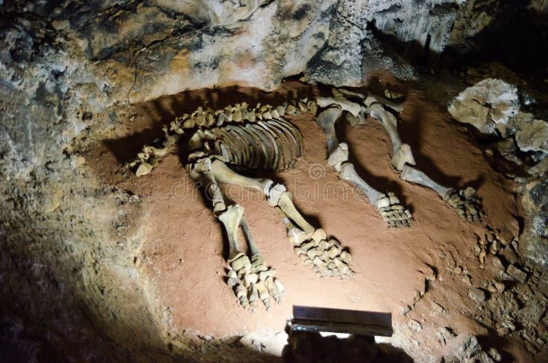 Mammutskelett in einer Höhle Emine Bair Khosar krim stockbilder