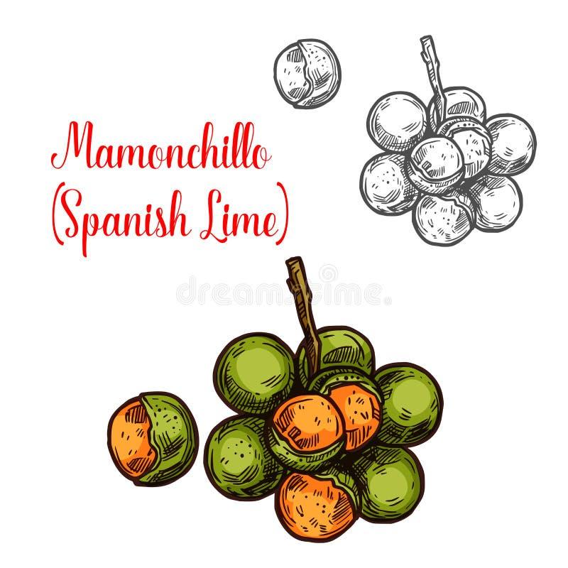Mamonchillo wapna nakreślenia wektorowa owoc royalty ilustracja