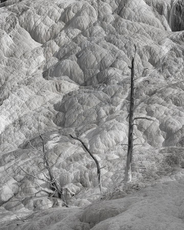 Mamutowi Gorących wiosen drzewa w Czarny I Biały zdjęcie royalty free