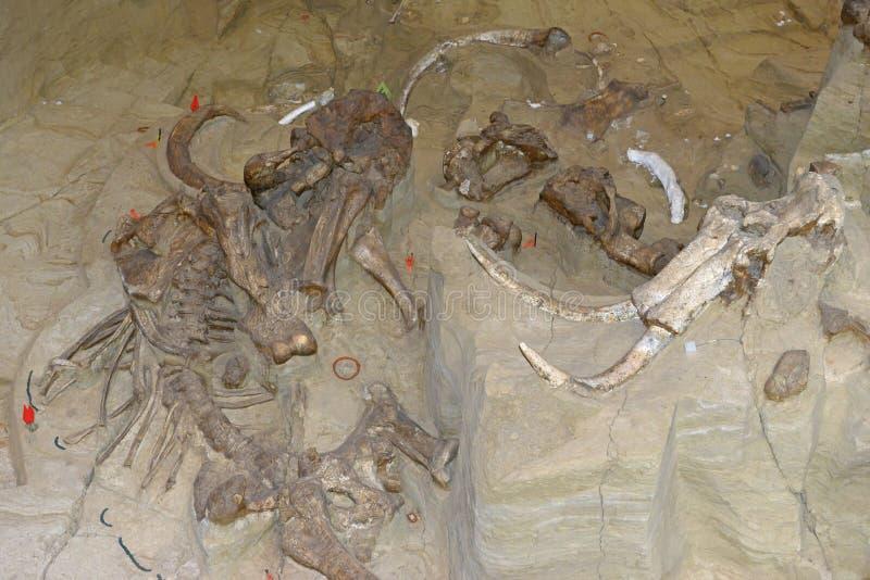 Mamutowy wykopaliska miejsce w Południowym Dakota obrazy stock