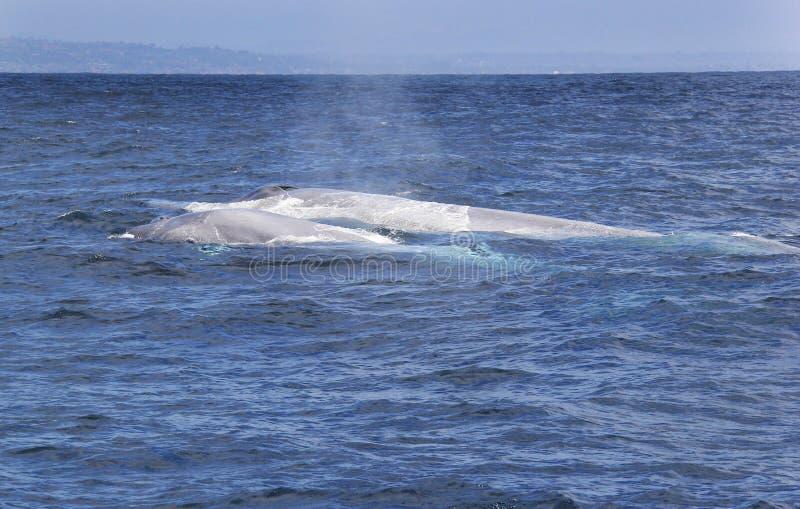 Mamy i dziecka Błękitni wieloryby obrazy royalty free