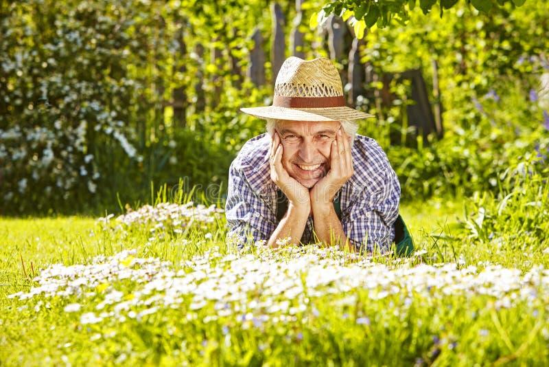 Manängen blommar trädgårdsmästaren arkivbilder