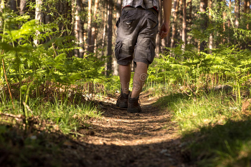 Man of adventure in the forest on a sunny day. Man of adventure in the forest on a sunny spring day royalty free stock photography