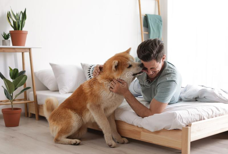Man and Akita Inu in bedroom decorated with houseplants stock photography