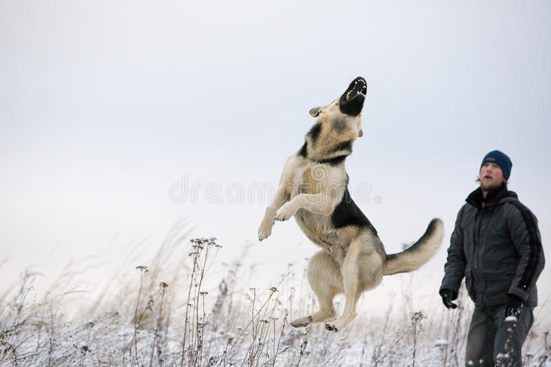 Download Man And Alsatian Dog Stock Photography - Image: 11436872