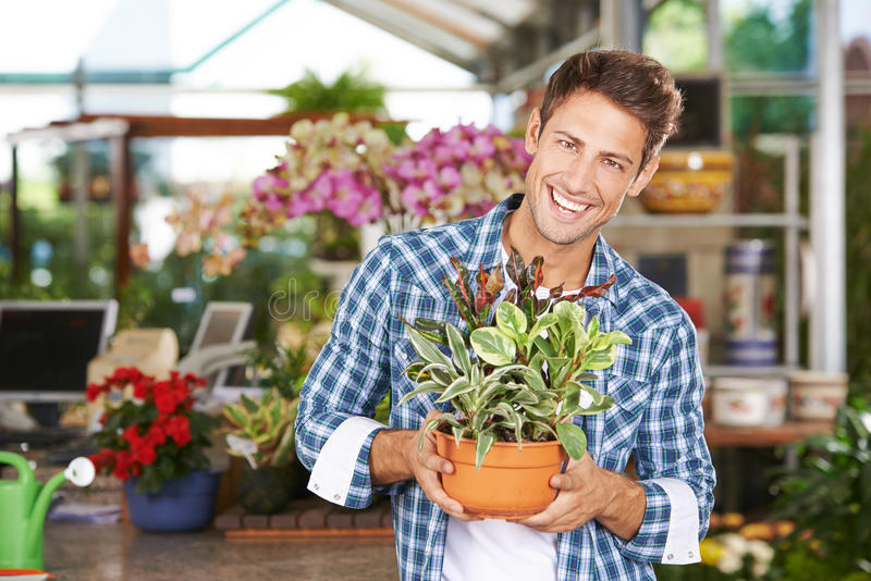 Man as gardener in nursery shop stock image