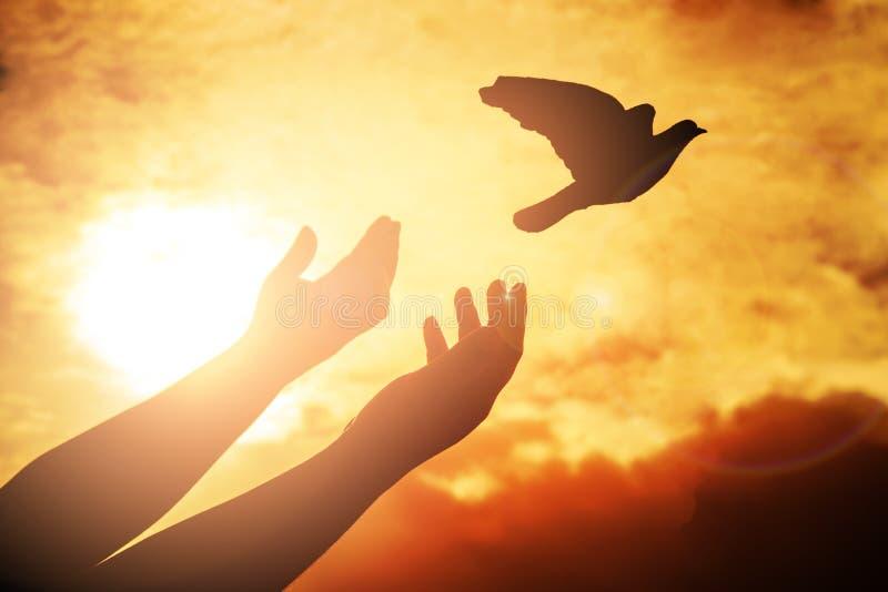 Man att be och den fria fågeln som tycker om naturen på solnedgångbakgrund, royaltyfri fotografi
