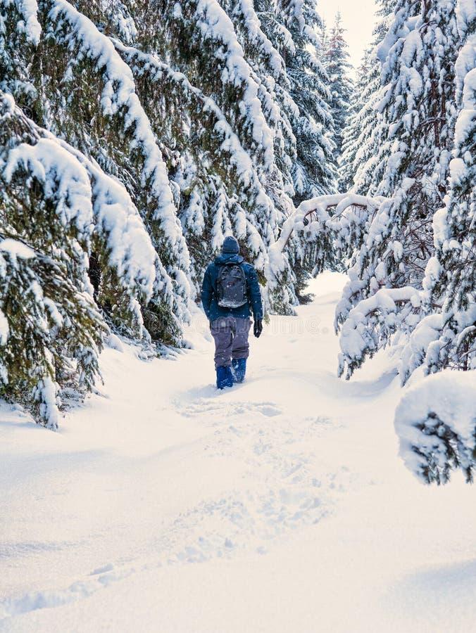 Man att fotvandra på den snöig skogen för vintern med ryggsäcken Lopp passform arkivfoto