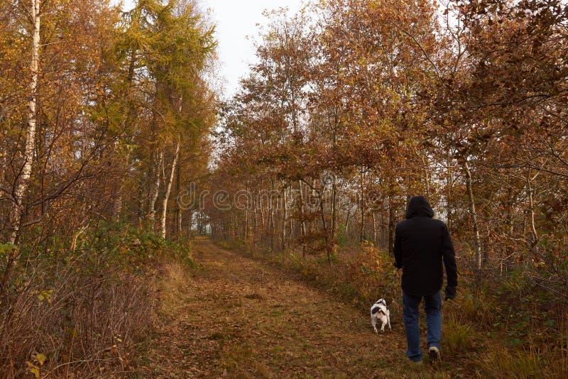 Man att gå hunden i skogen på nedgången arkivfoto