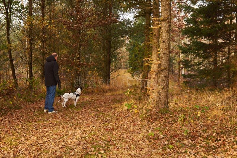 Man att gå hunden i skogen på nedgången royaltyfria foton