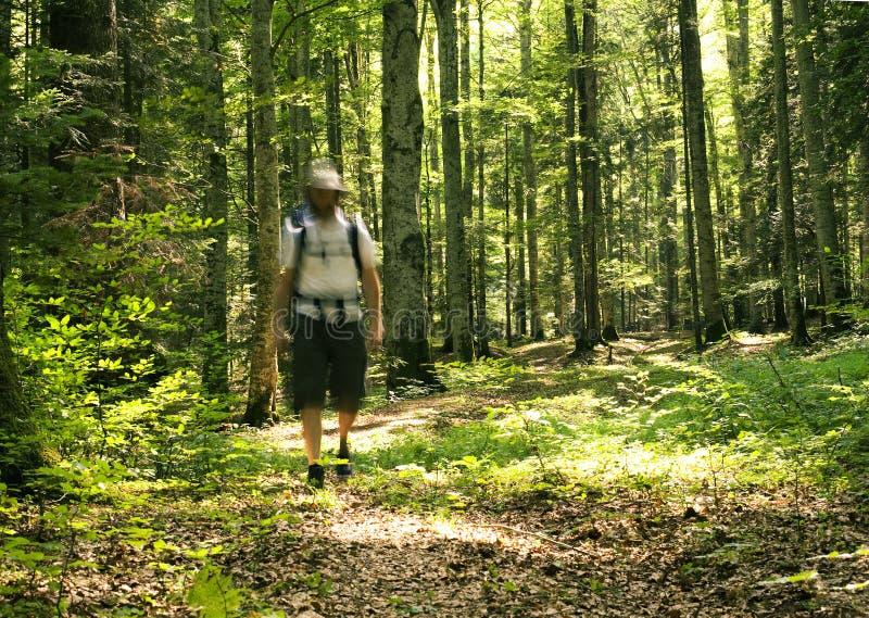 Man att gå i skogen royaltyfria foton