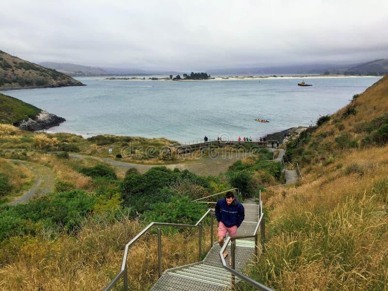 Man att gå upp trappan från stränderna av Otagoen Peninsul royaltyfri foto