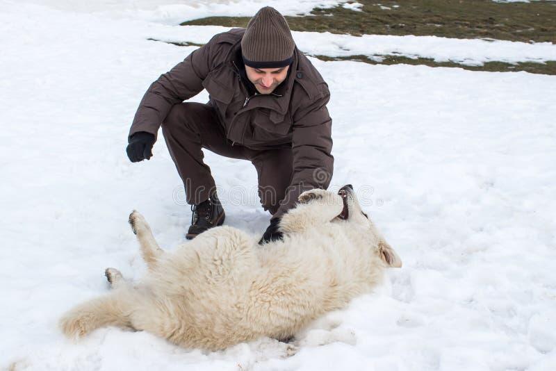 Man att spela med en vit hund i vinter royaltyfri fotografi