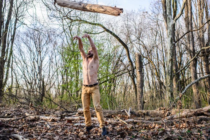 Man beaded brutal lumberjack toss big heavy log. Masculine leisure. Lumberjack or woodman naked muscular torso stock images