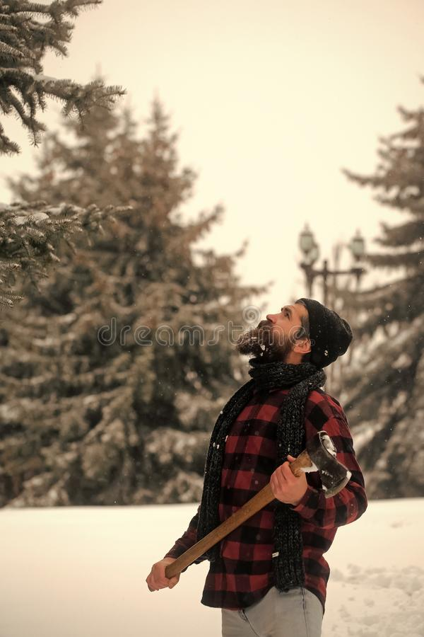Man with beard in winter forest with snow hold axe. Christmas hipster lumberjack with ax in wood.. New year man in snowy cold forest. Wanderlust, hiking and royalty free stock photography