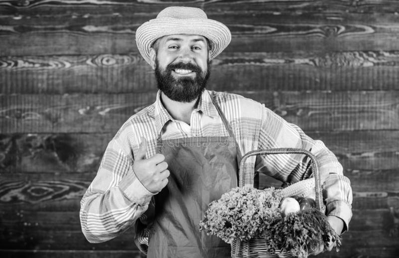 Man bearded farmer wear apron presenting vegetables wooden background. Farm delivery fresh vegetables. Farmer hipster. Straw hat deliver fresh vegetables. Fresh royalty free stock image