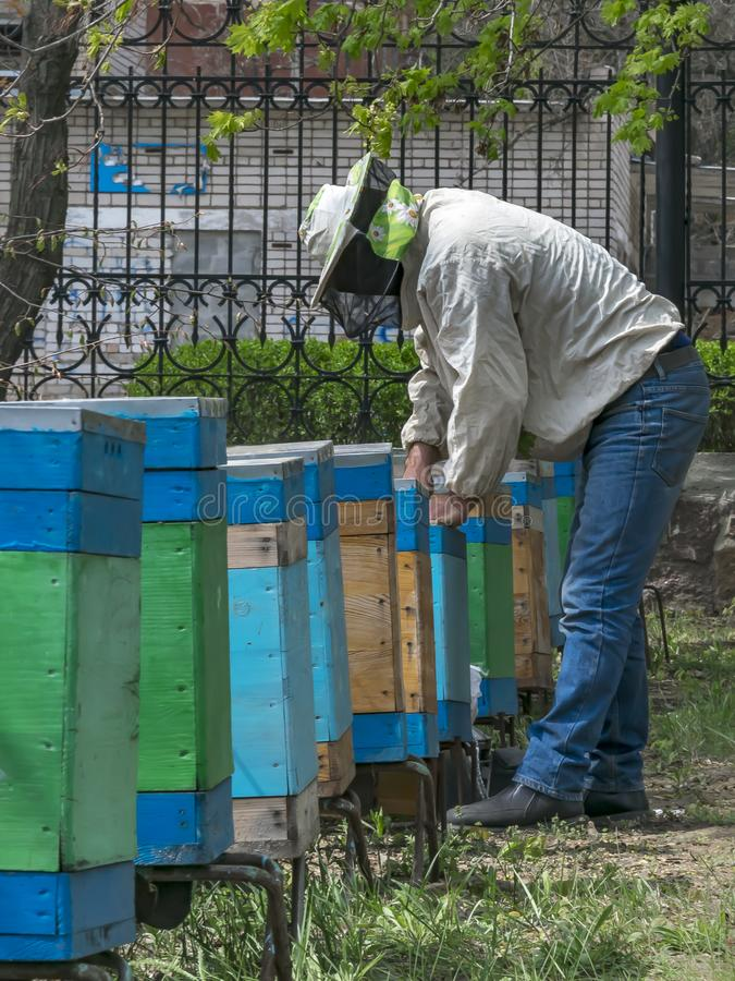 A man beekeeper inspecting the wooden bee hives outdoor in yard or spring garden. royalty free stock image