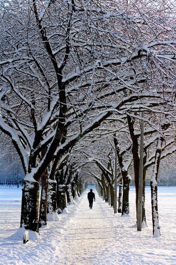 Man In Black Jacket Walking On Snowy Tree During Daytime Free Public Domain Cc0 Image