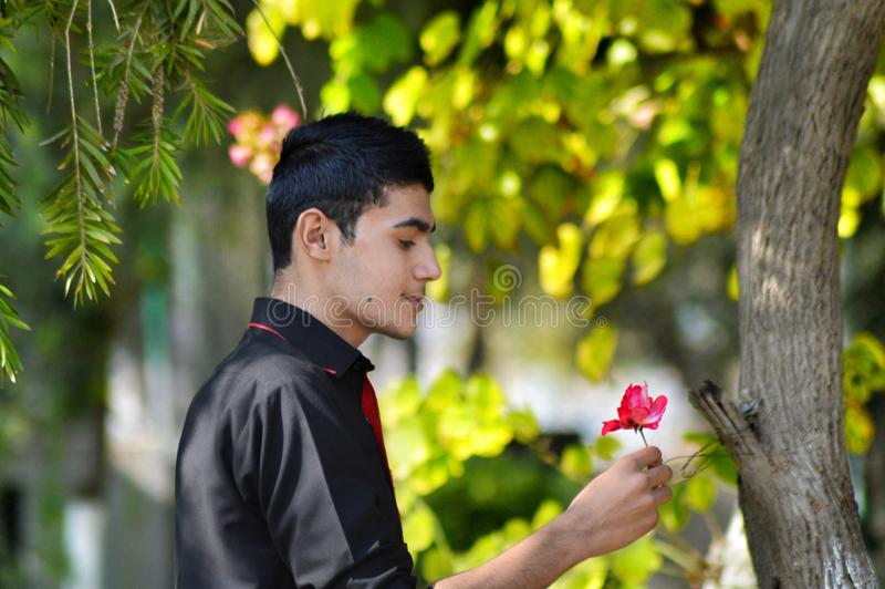 Man in Black Shirt Holding Red Petaled Flower royalty free stock photography