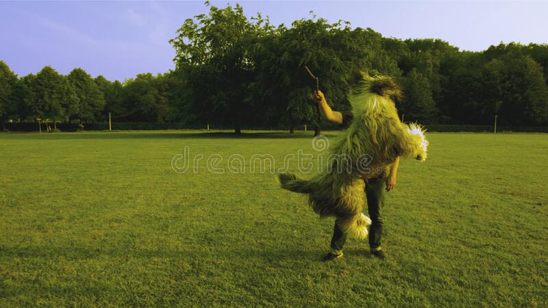 Man in Black Shirt Standing on Green Lawn While Playing With Brown Long Coat Medium Sized Dog stock photos