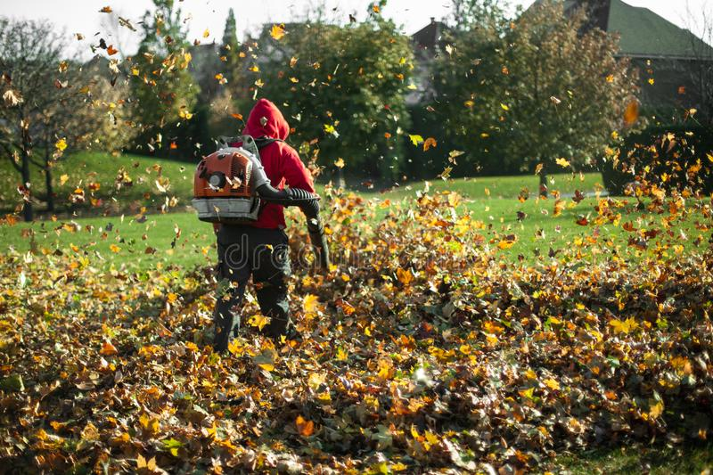 Man is blowing leaves as part of a landscaping project. Man blowing autumn leaves away with a leaf blower, seen from behind stock photography