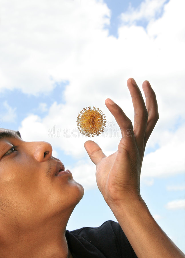 Man blowing flying flower stock photography