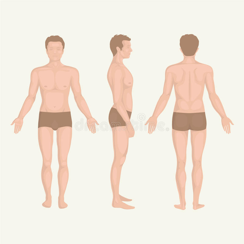 Man body anatomy, front, back and side royalty free illustration