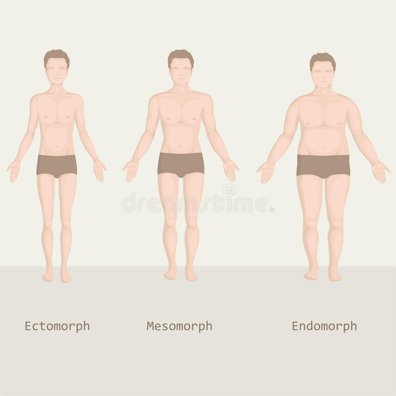 Man body types, from fat to fitness, royalty free illustration