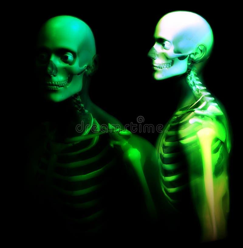 Download Man Bone 25 stock illustration. Illustration of joints - 1272811